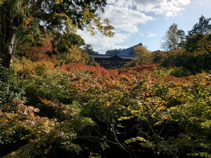 A glimpse of Japan: Atop thetrees